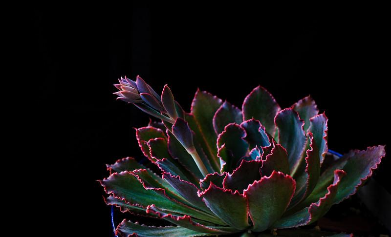 succulent 052220-3351.jpg