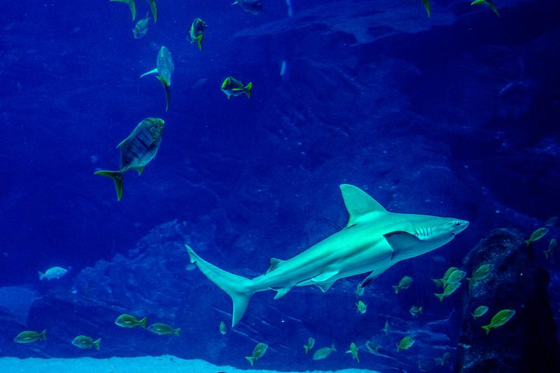 GA Aquarium with Linc, Ali & Abe-66.jpg