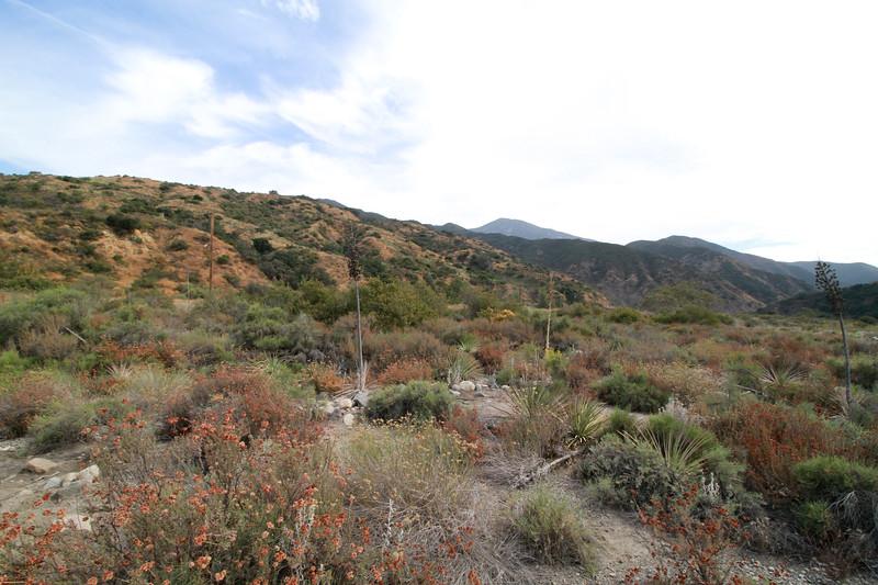 32633-Trabuco-Canyon-Rd-Mitchell-East-Trabuco-Canyon_52.JPG