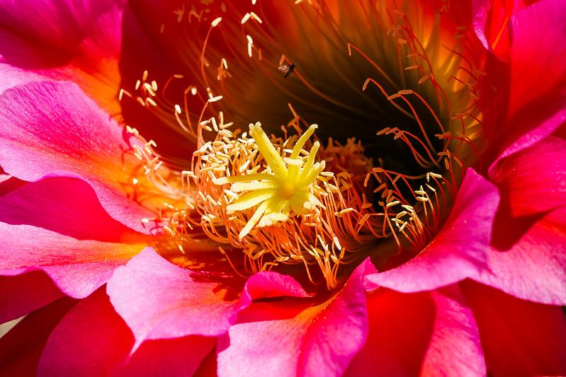 ASDM Flowers 4-5-2017c.jpg