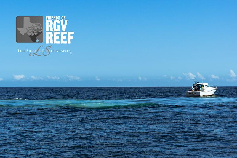 LS - People - RGV Reef-11.jpg