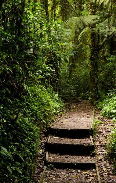 Reserva Bosque Nubosa Santa Elena , Monteverde