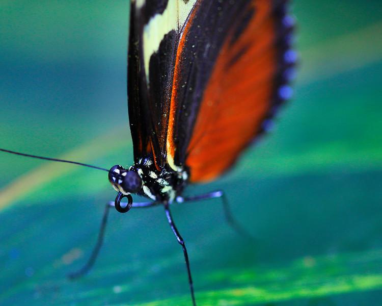 Butterfly 05.jpg