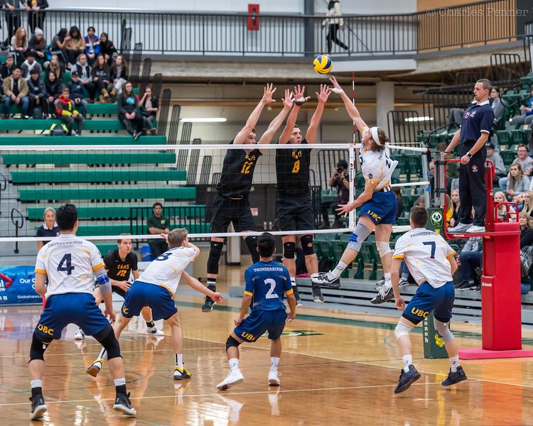 Volleyball UofA Bears vs UBC Thunderbirds