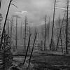 Yellowstone NP WY 2012