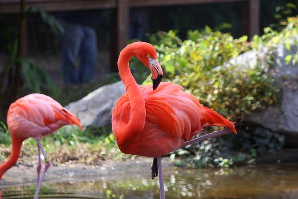 Alyssa Zoo