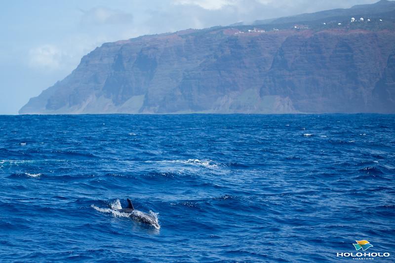 whales-leila-70.jpg
