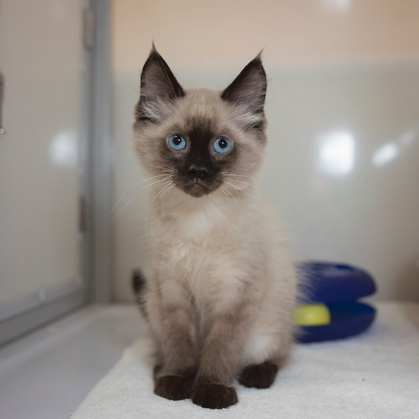 Cortland SAFE Haven for Cats July 7, 2014-07_07_14-103.jpg