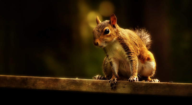 Paintography of a Squirrel by Ray Bilcliff - www.trueportraits.com