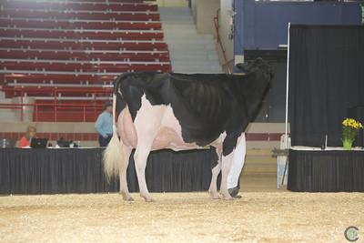 NY Spring Holstein Sr Cows 2017