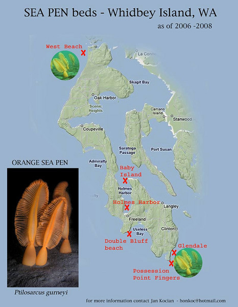 Sea Pens Whidbey map S.jpg