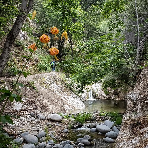 20190621251-Switzer Falls, Bear Canyon.jpg