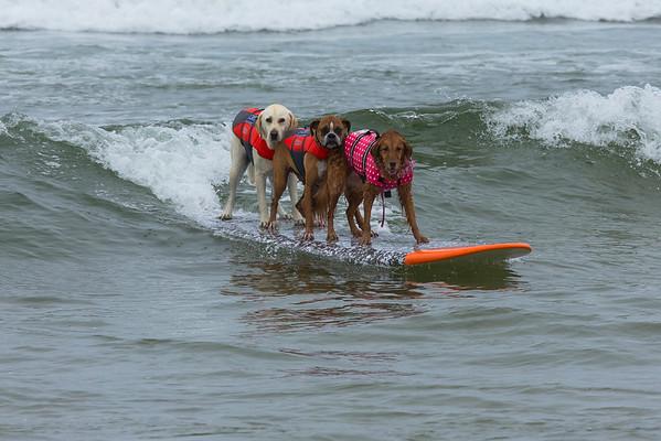 PURINA PRO PLAN INCREDIBLE DOG CHALLENGE HUNTINGTON BEACH 06  10 AND 11 2016