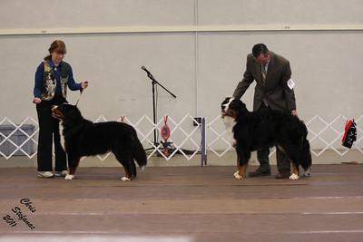 9-12mo Puppy Dog PVBMDC Sunday 2/20/2011