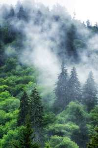 Great Smoky Mountains: Foggy, Misty, Moody Mountains