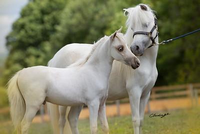 Pandoras Miniature Horses