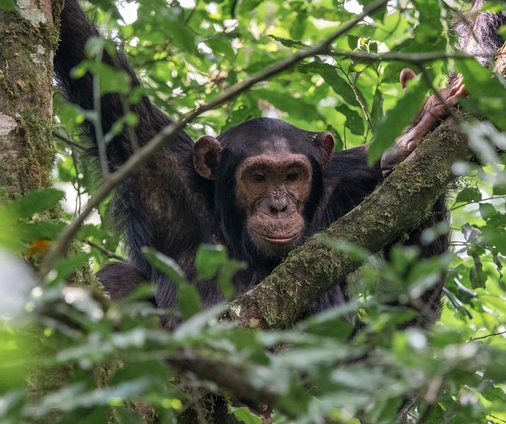 Uganda_T_Chimps-1566.jpg