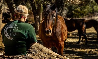 Horses of Tir Na Nog - Feb 8, 2020