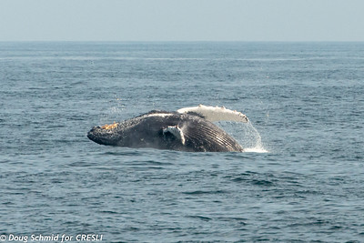 2019-08-18-Montauk-Whale-Watch