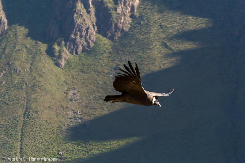 06.02_Colca Canyon-5834.jpg