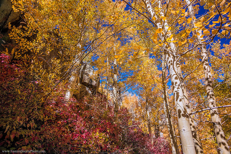 Eastern_Sierra_Autumn_MG_3105.jpg