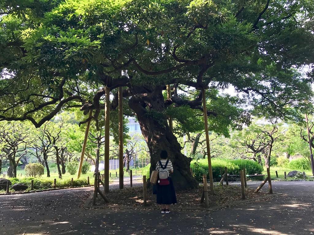 Shiba-koen Park