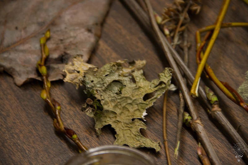 Winter Botany Class 02-25-2017 High Res (19 of 51).jpg