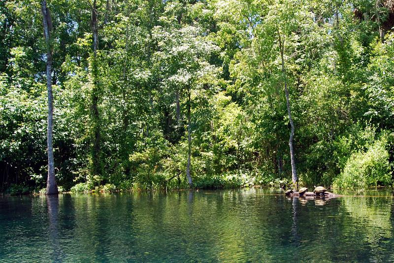 2014 Silver Springs, Florida (11).JPG