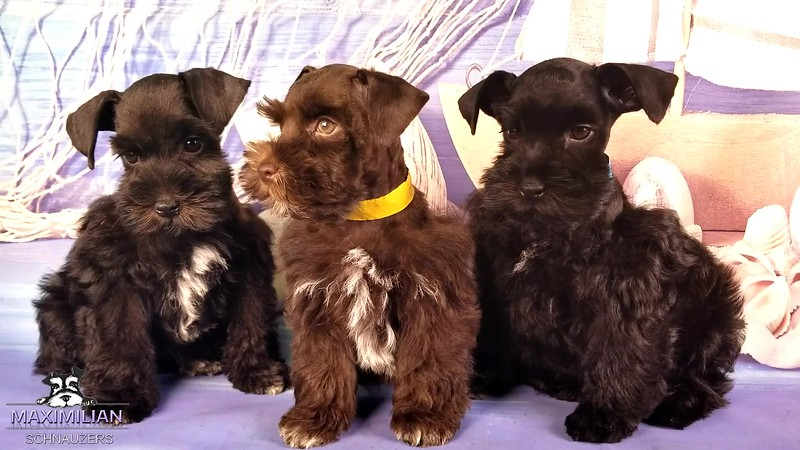 Annie Pups 3.mp4