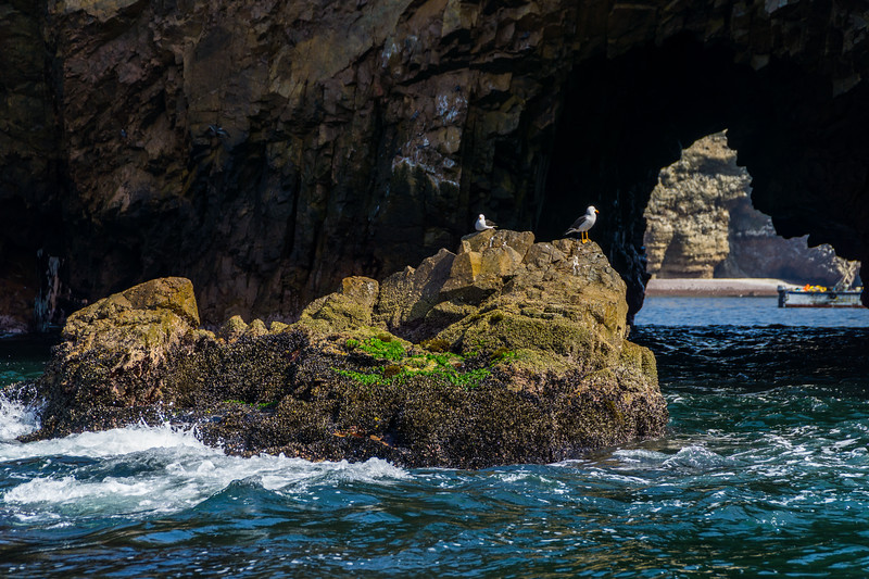 Birds Sitting on a Rock in Ocean by a Sea Cave
