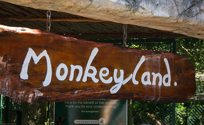 Monkey land and World of Birds