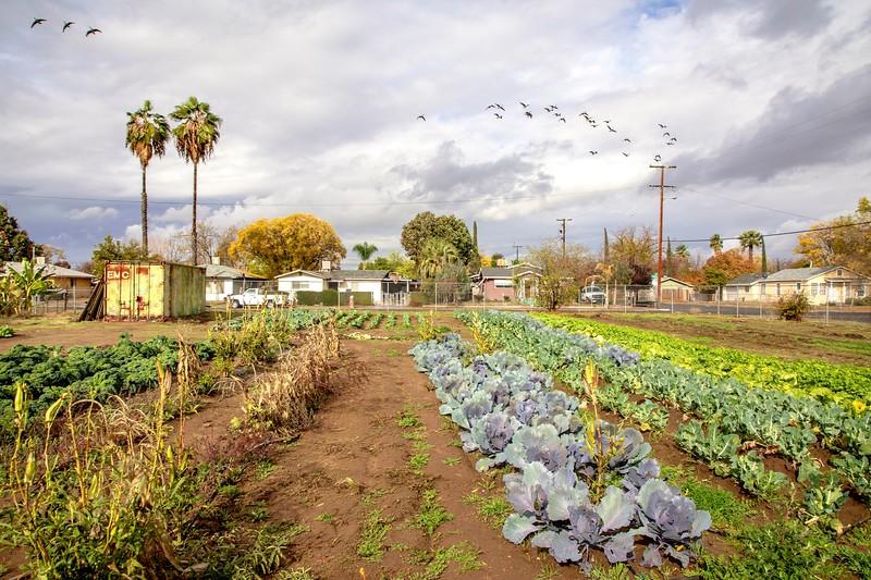 Freedom0031-Farm.jpg