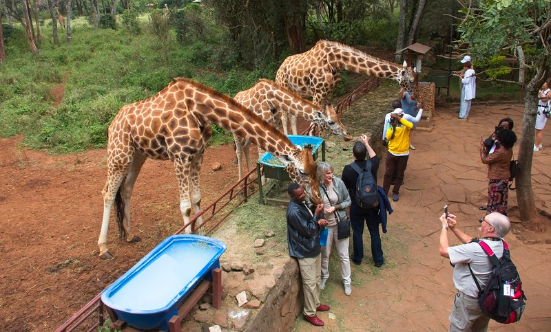 Giraffe Center, Karen, Nairobi