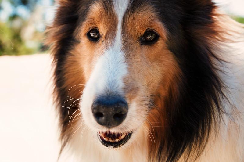 Cuda dog III.jpg