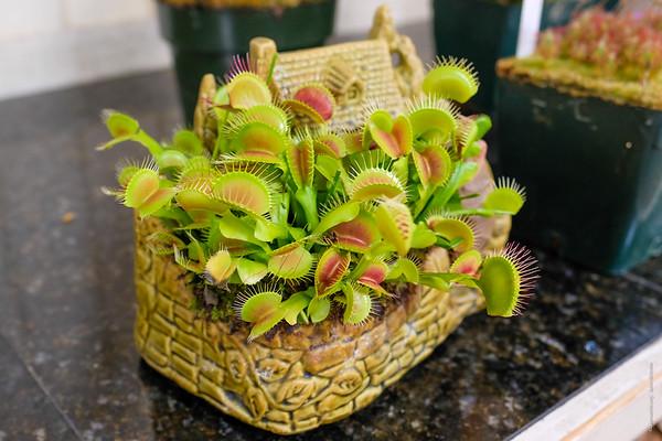 Carnivorous Plants Show