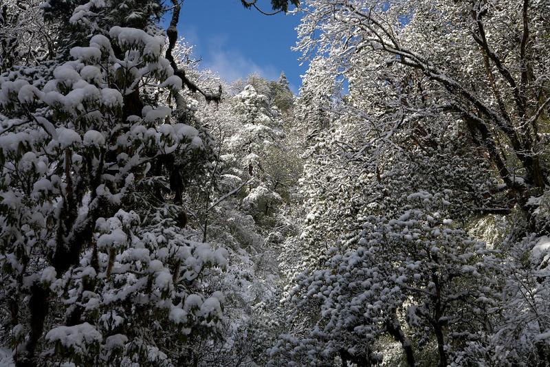 2007-02-26 at 10-36-31 - IMG_2868.jpg