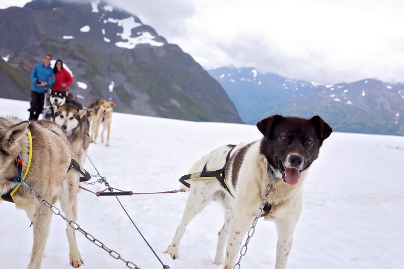 DogSledding8-11-2.jpg
