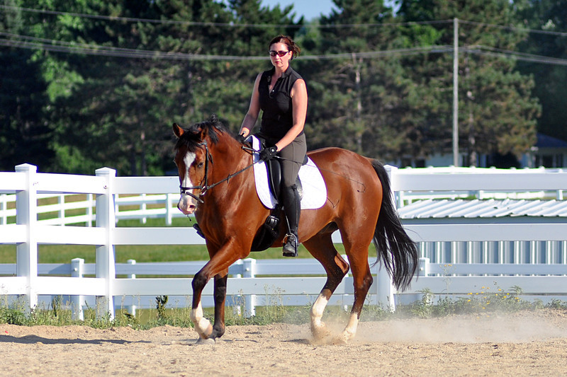 Horses July 2011 164a.jpg