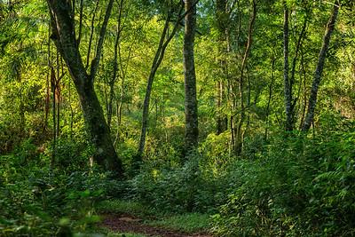 The Jungle: Yacutinga Lodge, the River and the Guarnari
