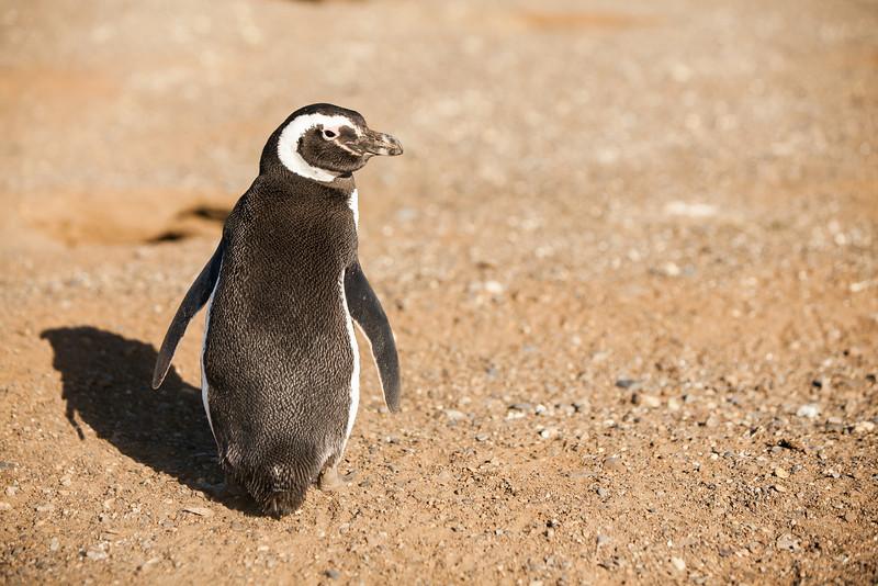 patagonia-1014.jpg