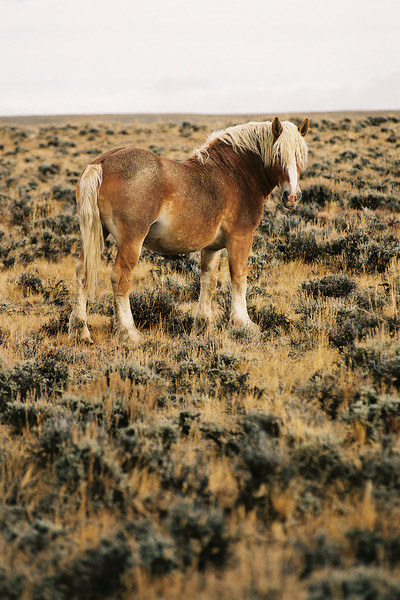 I used a 200mm lense to get in close to this wild horse. There were no structures within 20 miles.  Wyoming. 2004.