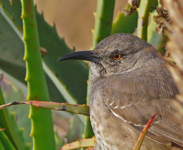 Mexico Birds 2010 2