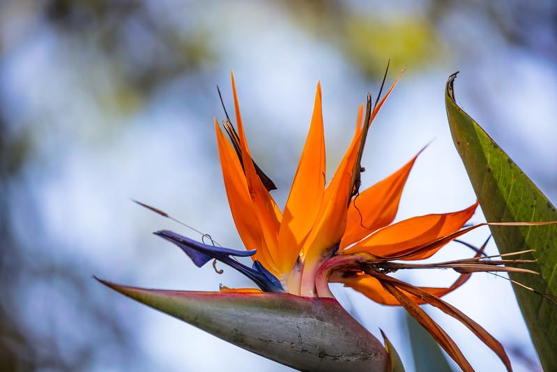 Bird of Paradise-1449.jpg