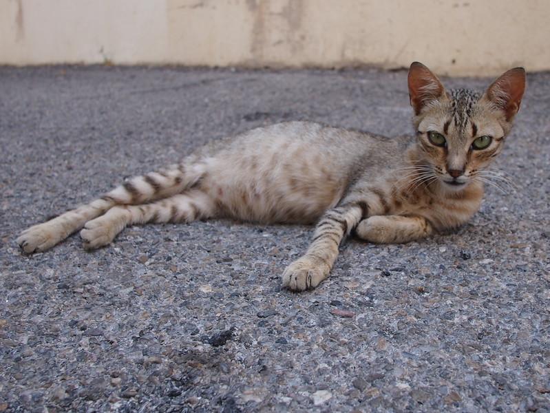 P7185415-street-cat.JPG
