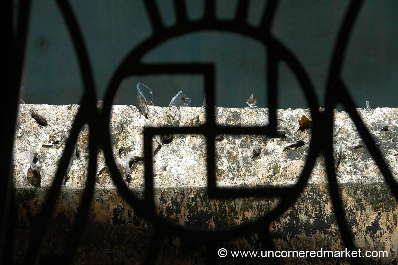 A Symbol of Peace - Kochi, India