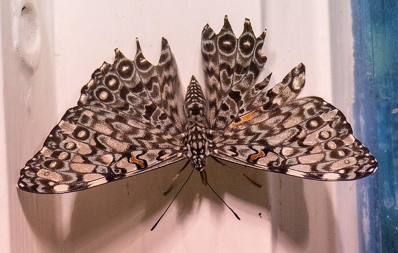 2014 NOLA Butterfly.jpg