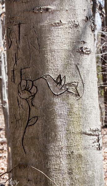 bark carving 040513-1.jpg