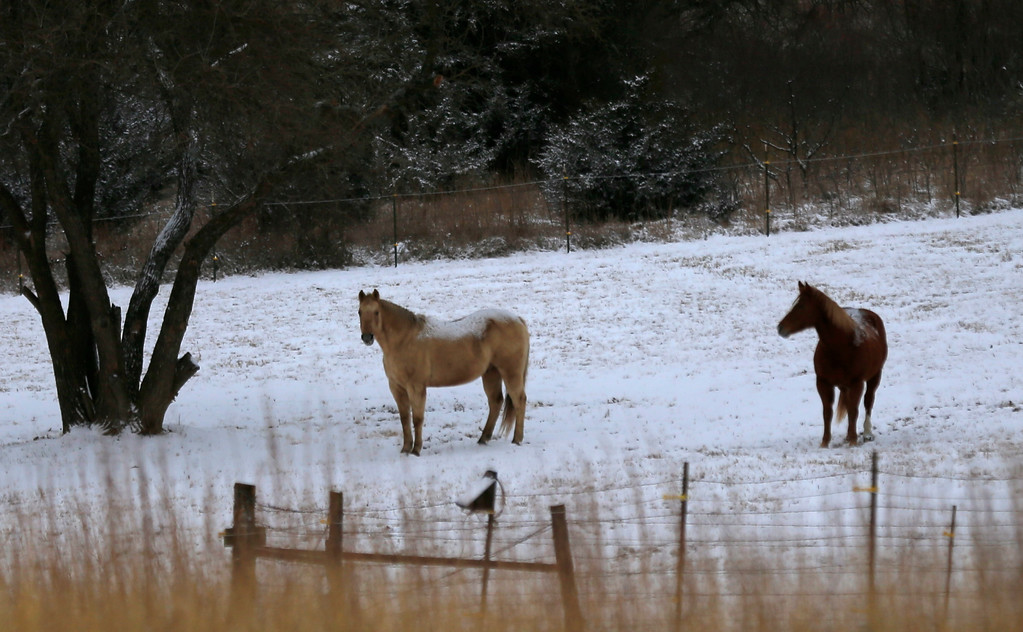 . Horses graze in a snow-covered pasture near Stull, Kan., Thursday, Jan. 5, 2017. Two to four inches of snow fell overnight in the area. (AP Photo/Orlin Wagner)