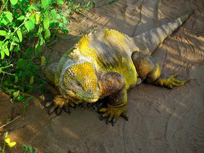 The Galapagos Trip