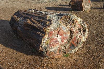 Petrified Forest - Painted Desert, Az